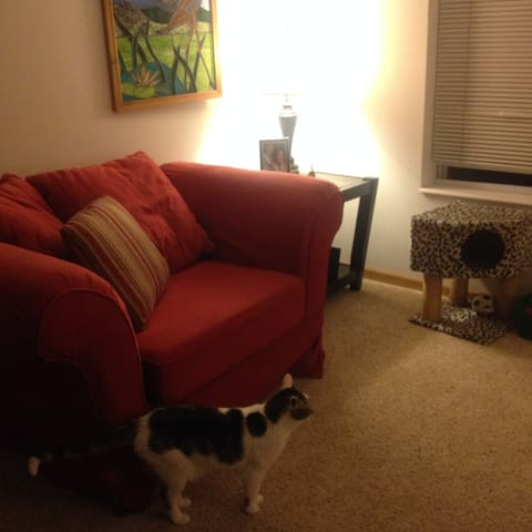 Entire apartment in Fitchburg - Fitchburg - Daire