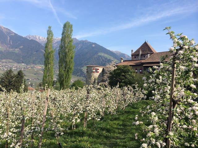 Ferienwohnung Schloss Planta, Meran - Meran - Castell