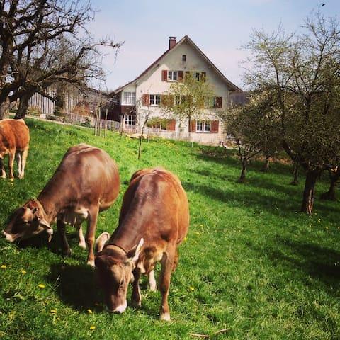 Gemütliches DZ, Schwalbennest - Schneisingen - Bed & Breakfast