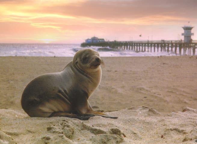 Ocean Views from Lrg Private Deck! - Seal Beach