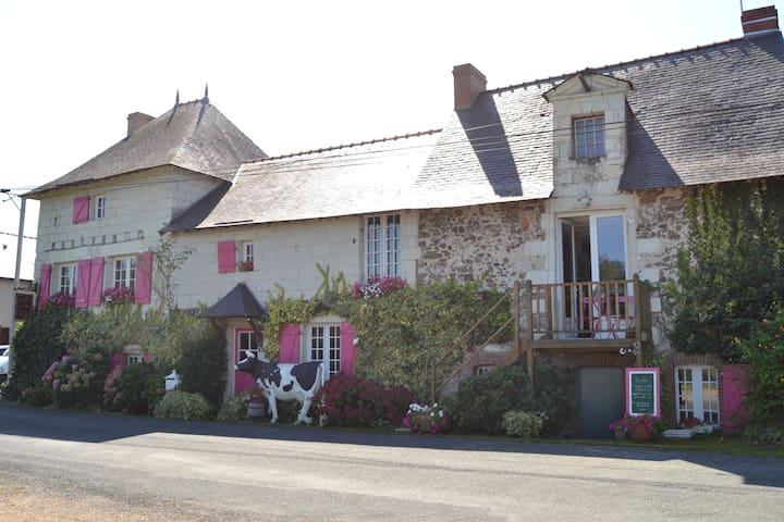 Logis au Fil de l'Eau (face Loire) - Chalonnes sur Loire  - Daire