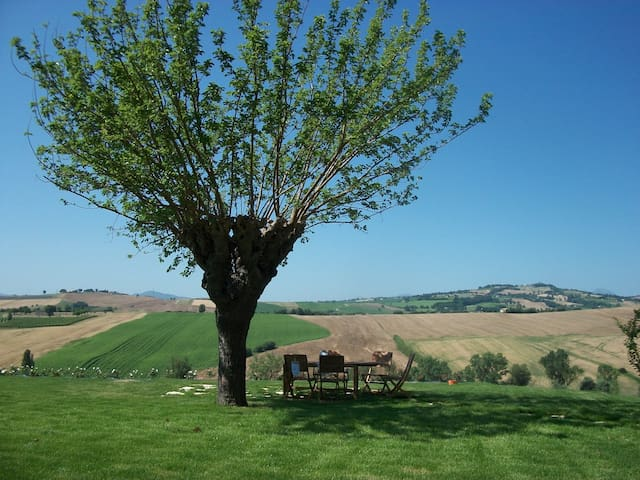 Italian Marche Hills - Sunrise - Mondavio - 別荘