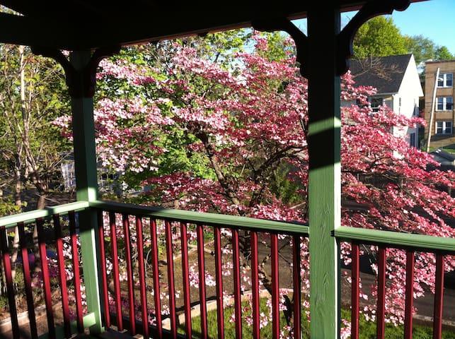 Cherry Blossom Apartment - Hartford - Departamento