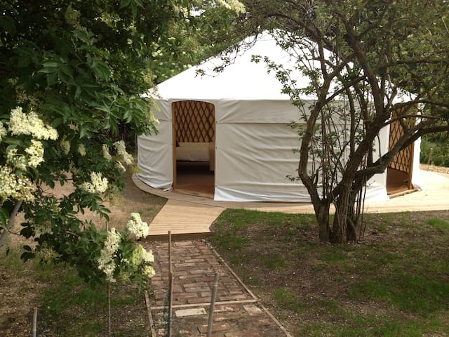 Luxury camping in Elderberry Yurt - Norwich - Yurt