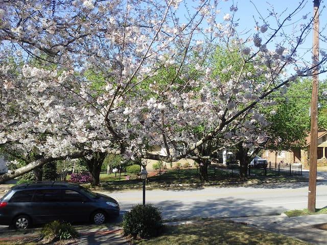 Charming Cherry Blossom Bungalow   - Macon