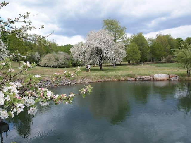 'Higher Ground' Post & Beam Beauty! - Middletown Springs - Casa