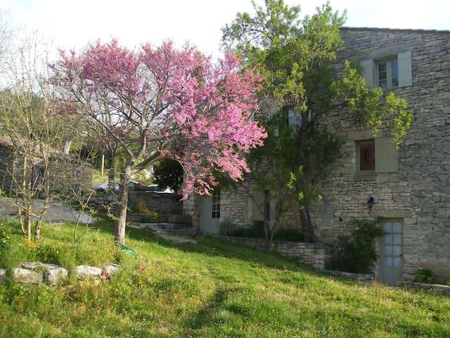 Maison provençale Luberon - Buoux - Casa
