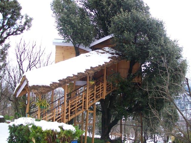 Beautiful treehouse in Manali - Katrain - Boomhut