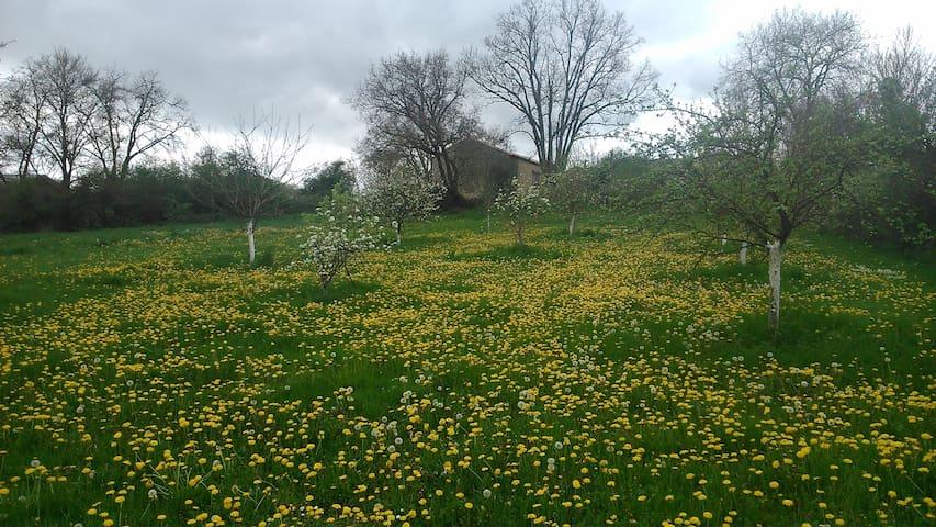 Charming farmhouse in private park near Poitiers - Payré