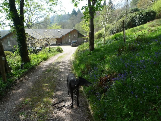 Studio in woodland with view to sea - Lyme Regis - Lakás