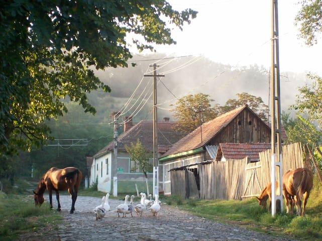 Genuine traditional household - Stanciova - Huis