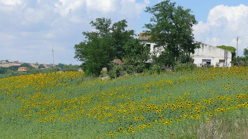 Relax in modesta casa in collina  - Petacciato - Hus