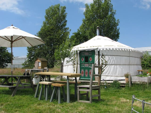 Yurt in a field,something different - Almodington - Yurt
