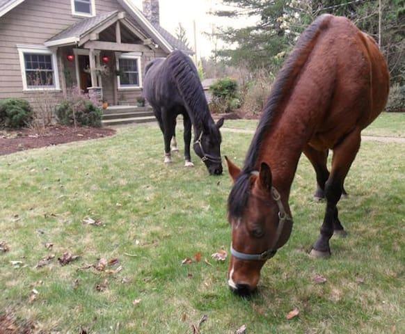 Peacocks & Horses at Corbett Farm - Corbett - Квартира
