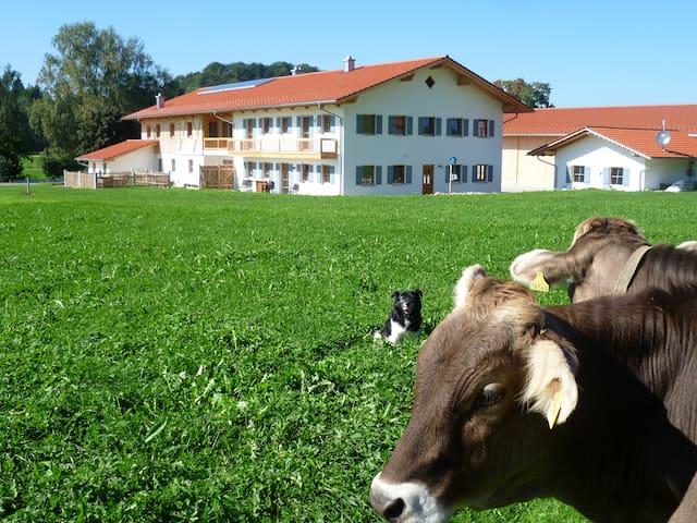 Neubauferienwohnung in Allgäuer Hof - Kaltental/Frankenhofen - Wohnung