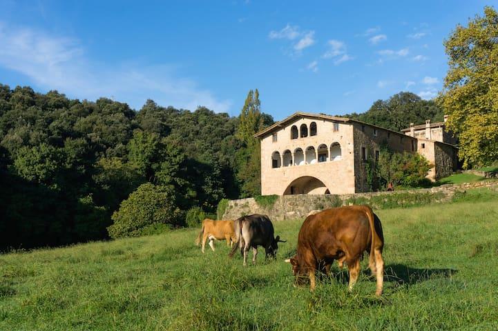 Cabana Callís 2/6 Pyrenees-Garrotxa - La Vall de Bianya - Mökki