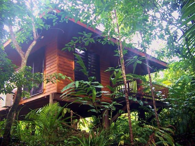 Wildwood cabin on exotic orchard - Cape Tribulation - Kabin