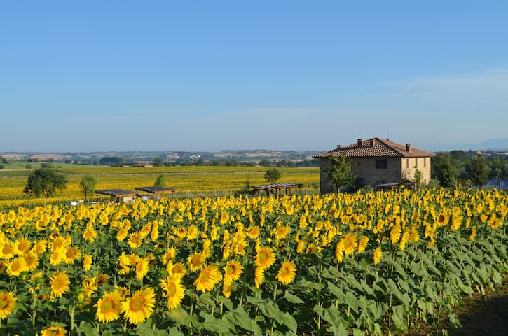 Podere Molinaccio with private pool - Panicale - Ev