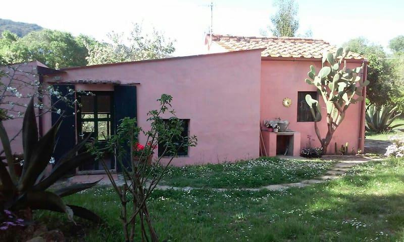 Deliziosa casetta singola Procchio - Colle di Procchio