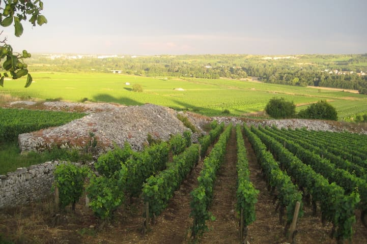 Real Burgundy, off the beaten path - Aluze