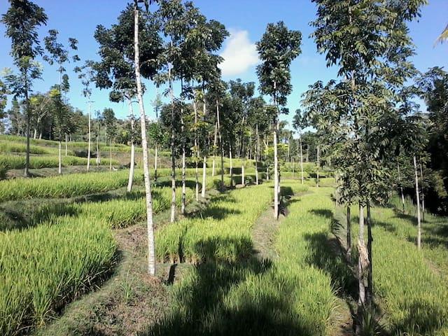 Rinjani Getaway Praya - Lombok - Bed & Breakfast