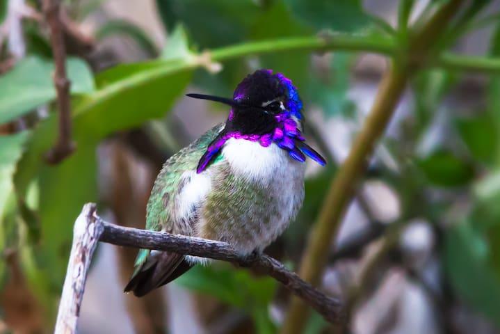 WOW Arizona! Eco-Lodge & Hummingbird Sanctuary - Tucson - Hus