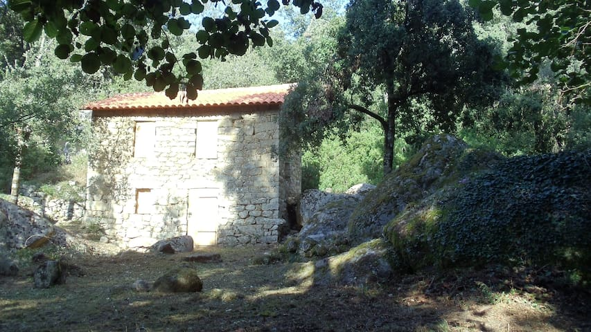 Vieux moulin  rivière, cascade - Peri - Lainnya