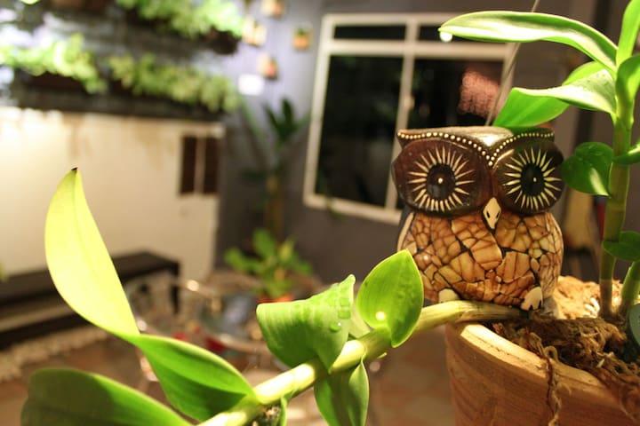 night owl homestay - Nibong Tebal